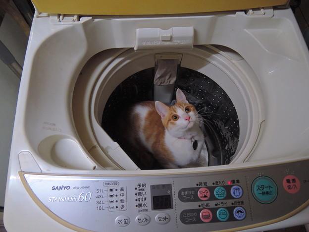 一緒に洗濯しちゃうぞ