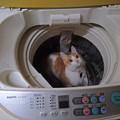 Photos: 一緒に洗濯しちゃうぞ