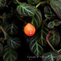 京都植物園-0884