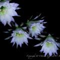 京都植物園-0898