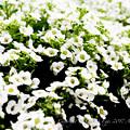京都植物園-0953
