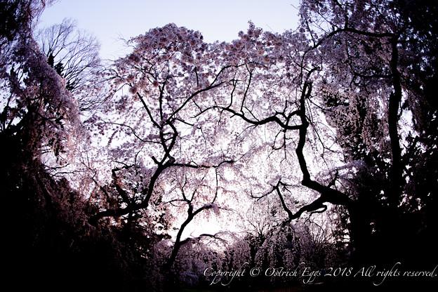 photo-4087