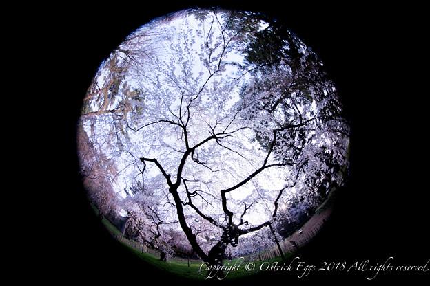 photo-4125