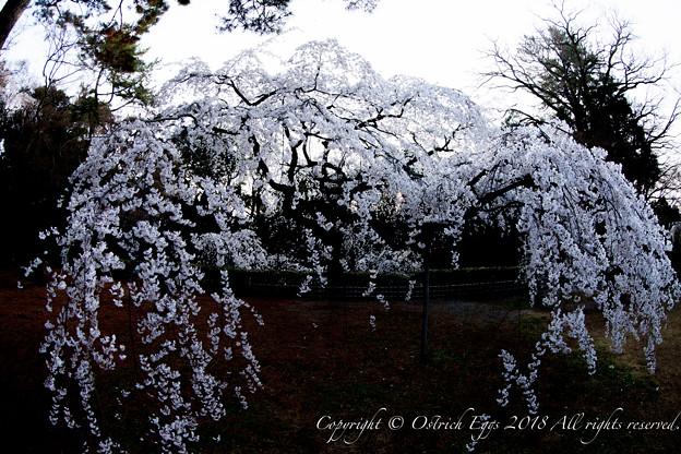 photo-4061