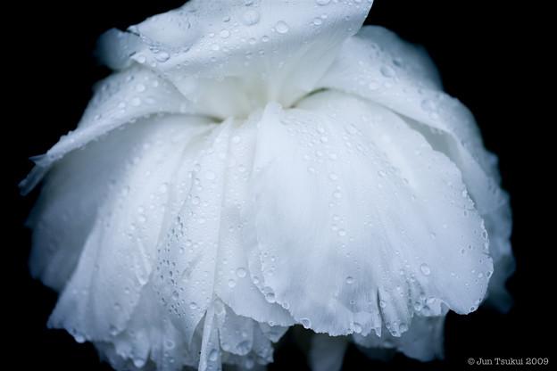 flower-5529
