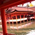 Photos: 宮島