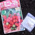 Photos: 【園芸】すずなりトマトの種 2018年[春]