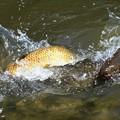 Photos: ため池にて