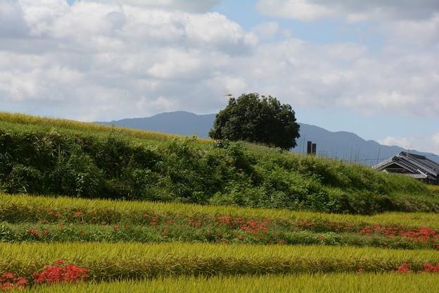 Photos: 田舎の秋