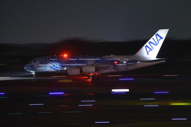 Photos: ANA A380 フライングホヌ