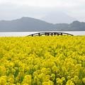 写真: 池田湖