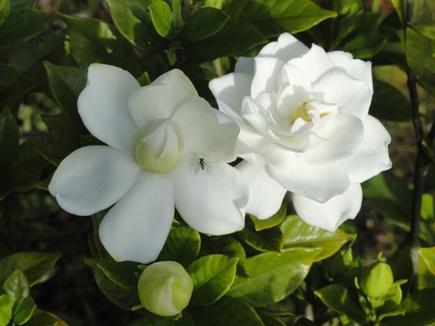 写真: 咲きました b