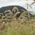写真: 草