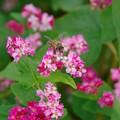 ミツバチも