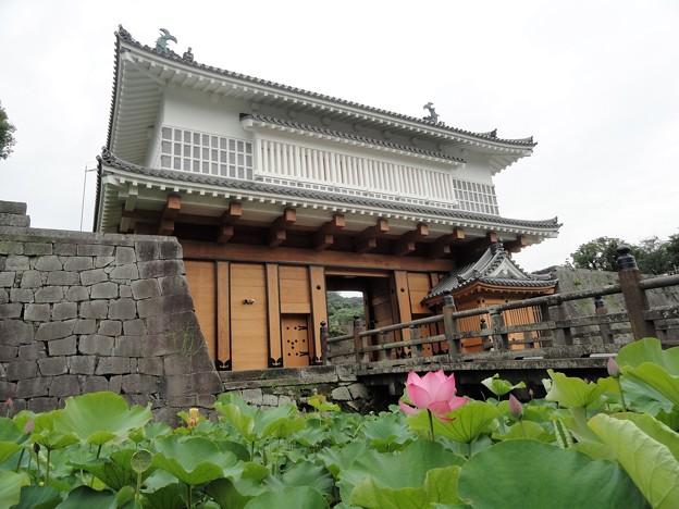 蓮の花と御楼門