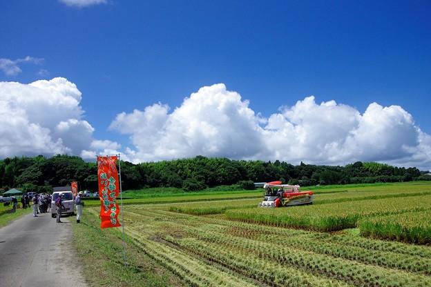 稲刈り体験発表会