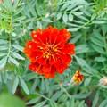 Photos: きれいな花 b