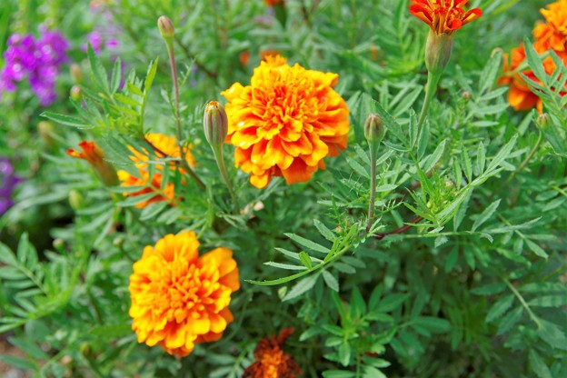 Photos: きれいな花 a