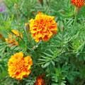 きれいな花 a