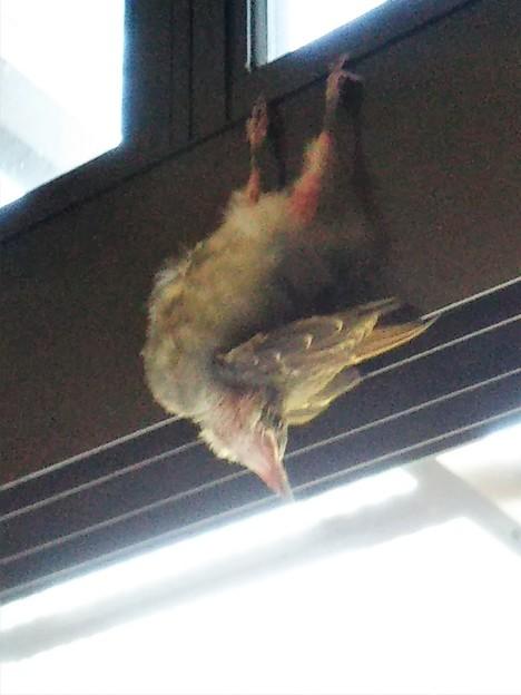 Photos: 何鳥?