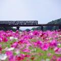 Photos: 指宿枕崎線