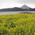 Photos: 池田湖