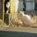 写真: 猫も上下関係