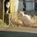 Photos: 猫も上下関係