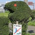 Photos: 見てるぞぉ