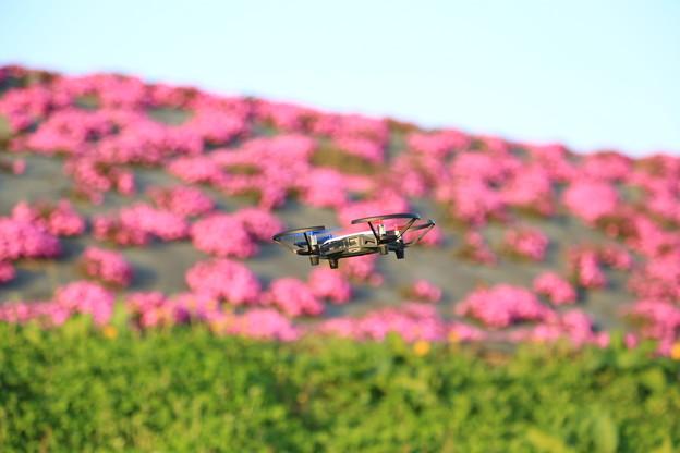 TELLOと芝桜