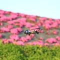 写真: TELLOと芝桜