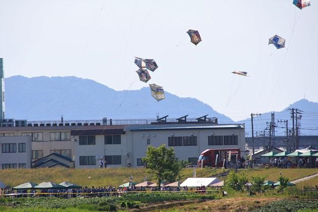 写真: 大凧合戦