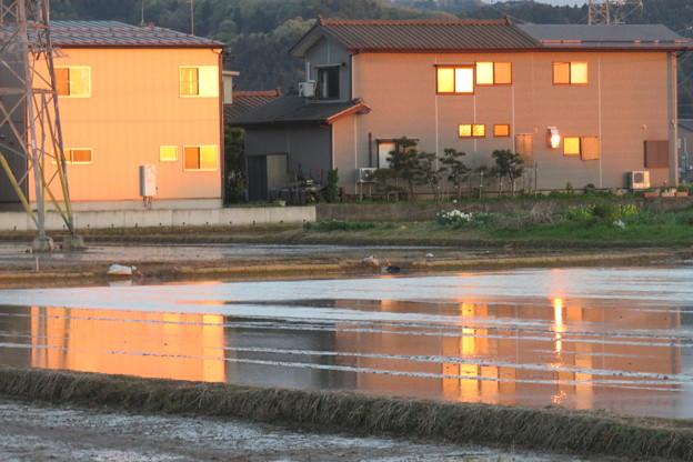 Photos: 水田に映りこむ