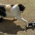 Photos: 猫パンチ!