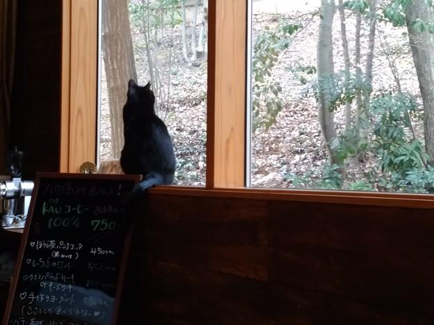 猫のいるカフェで