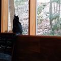 Photos: 猫のいるカフェで