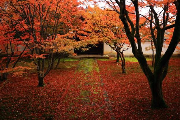 妙覚寺の本堂前庭園の唐門と散り紅葉