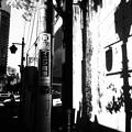 Photos: 影は生きている