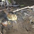180224-23アオジ♀の水浴び