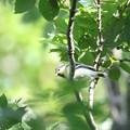 写真: 180511-4シジュウカラの幼鳥