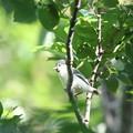 写真: 180511-5シジュウカラの幼鳥
