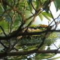 写真: 180601-1カイツブリの卵