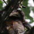 180610-6孵ったばかりの雛・早速親の背中に登ります・カイツブリ(1/3)