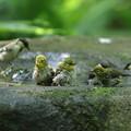写真: 180701-8混浴・メジロとシジュウカラ