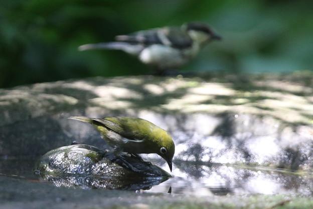 写真: 180715-7メジロとシジュウカラ
