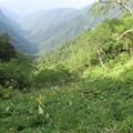 180726-25再挑戦「霞沢岳登山」・お花畑
