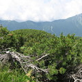 写真: 180726-77再挑戦「霞沢岳登山」・霞沢岳からの360度(2/9)