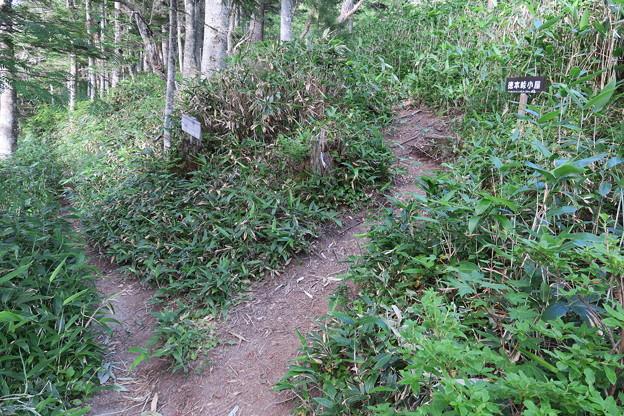 180726-89再挑戦「香住沢岳登山」・徳本峠分岐まで戻ってきました