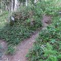 写真: 180726-89再挑戦「霞沢岳登山」・徳本峠分岐まで戻ってきました