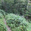 写真: 180727-4島々谷方面への道